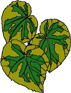 animated-leaf-image-0222