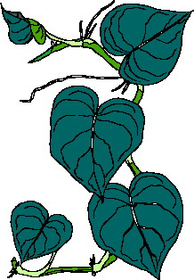 animated-leaf-image-0223
