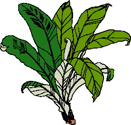 animated-leaf-image-0224