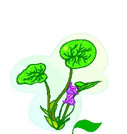 animated-leaf-image-0225