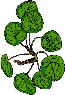 animated-leaf-image-0226