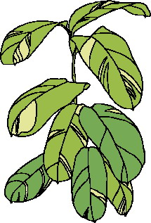 animated-leaf-image-0230