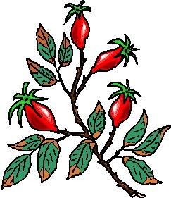 animated-leaf-image-0231