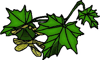 animated-leaf-image-0232