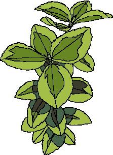 animated-leaf-image-0235