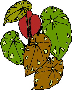 animated-leaf-image-0236