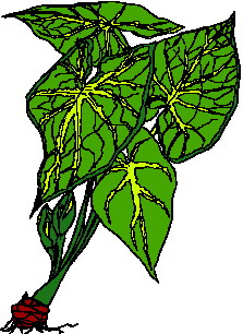 animated-leaf-image-0237