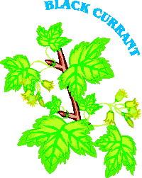 animated-leaf-image-0238