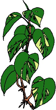 animated-leaf-image-0240