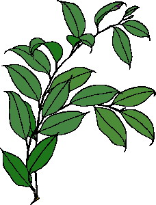 animated-leaf-image-0241