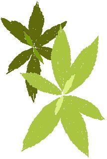animated-leaf-image-0243