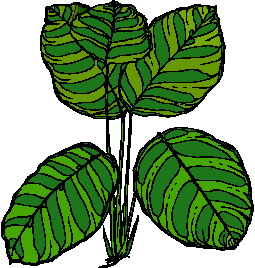 animated-leaf-image-0244