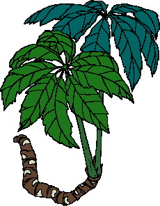 animated-leaf-image-0245