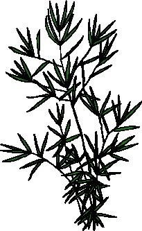animated-leaf-image-0246