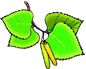 animated-leaf-image-0249