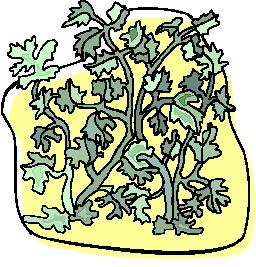 animated-leaf-image-0250