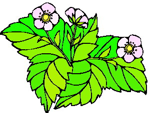 animated-leaf-image-0252