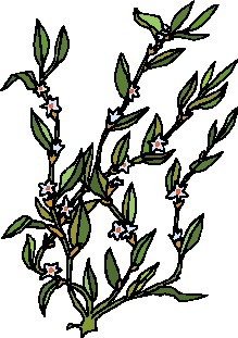 animated-leaf-image-0253