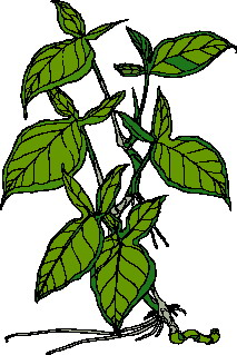 animated-leaf-image-0255