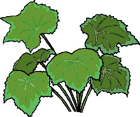 animated-leaf-image-0256