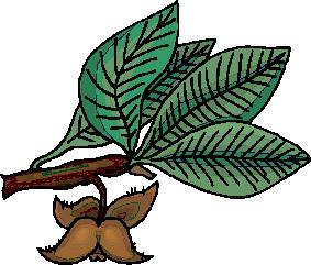 animated-leaf-image-0257