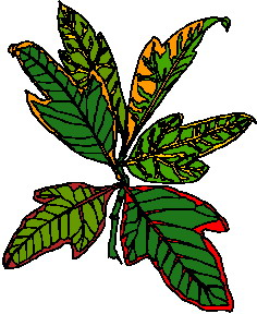 animated-leaf-image-0258