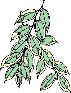 animated-leaf-image-0259