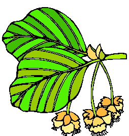 animated-leaf-image-0260