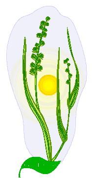 animated-leaf-image-0261