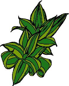 animated-leaf-image-0262