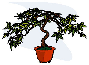 animated-bonsai-tree-image-0017