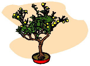 animated-bonsai-tree-image-0020