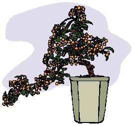 animated-bonsai-tree-image-0021