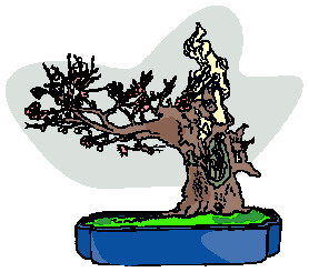 animated-bonsai-tree-image-0023