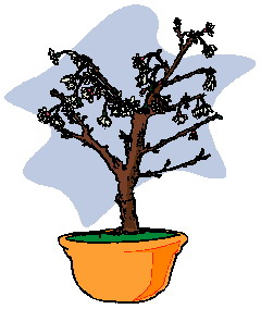 animated-bonsai-tree-image-0030