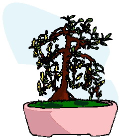 animated-bonsai-tree-image-0031