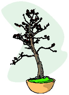 animated-bonsai-tree-image-0042