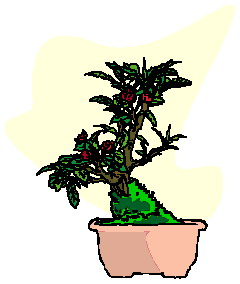 animated-bonsai-tree-image-0043