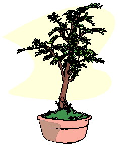 animated-bonsai-tree-image-0045
