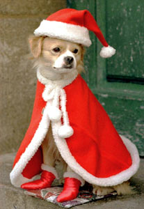 animated-christmas-animal-image-0068