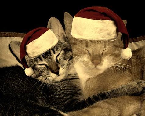 animated-christmas-animal-image-0115