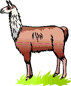 animated-lama-image-0002