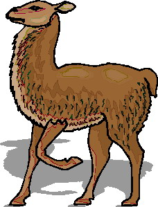 animated-lama-image-0004