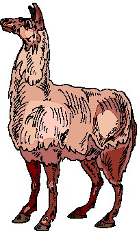animated-lama-image-0006
