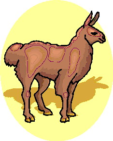 animated-lama-image-0008