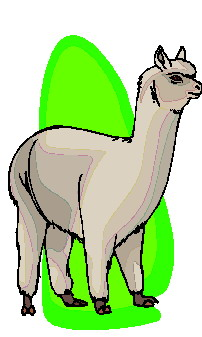 animated-lama-image-0011