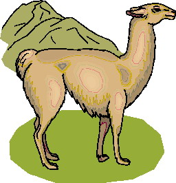 animated-lama-image-0014