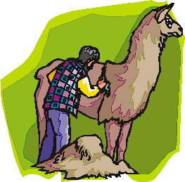 animated-lama-image-0023