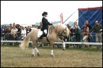 animated-dressage-image-0020
