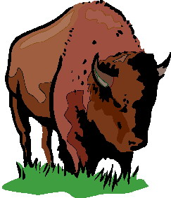 animated-buffalo-image-0005